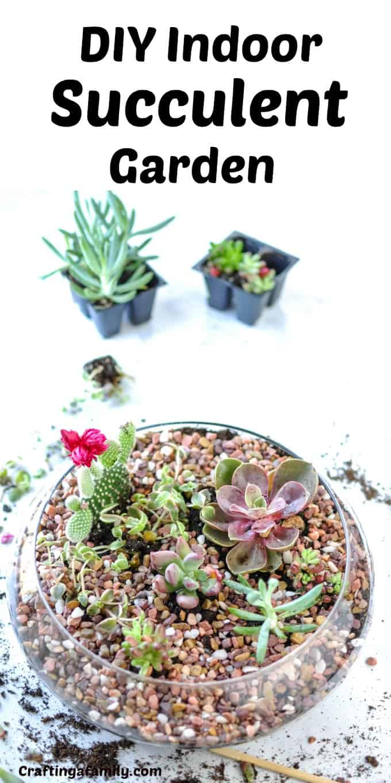 Diy Indoor Succulent Garden Crafting A Family