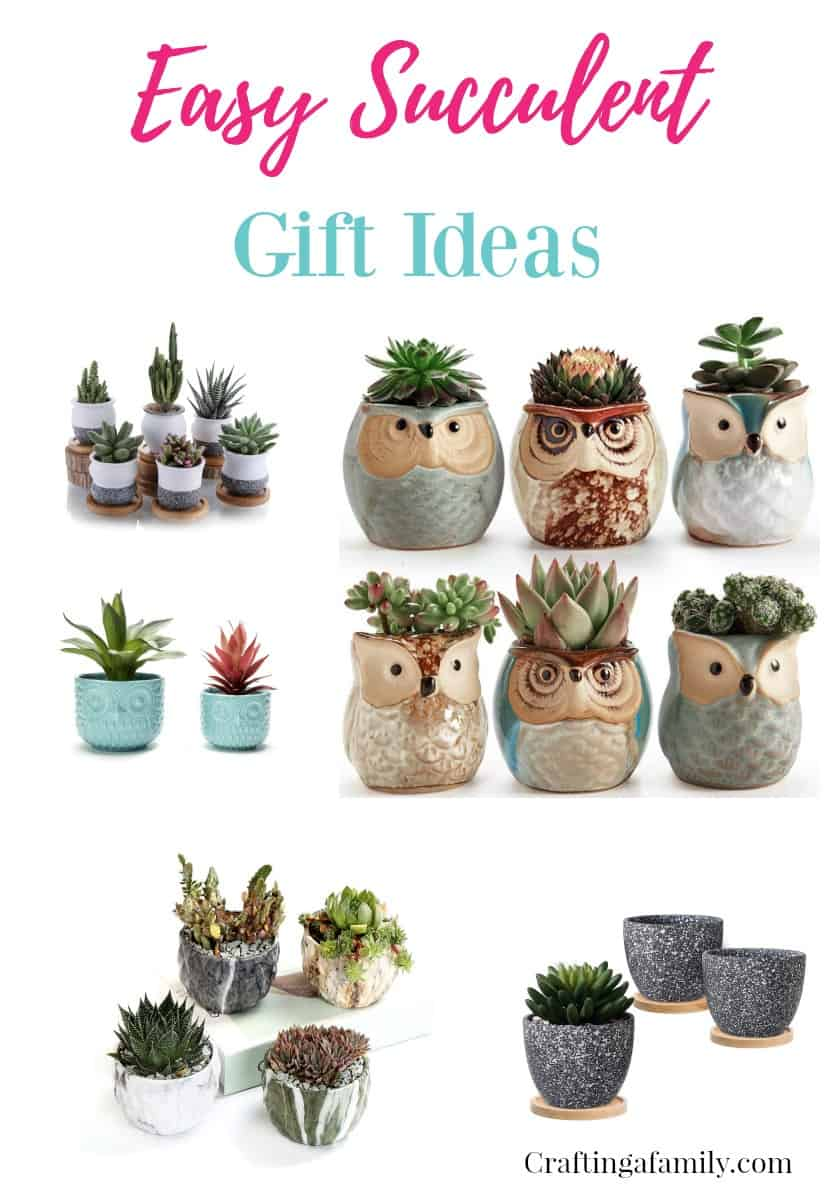 Easy Succulent Gift Ideas Crafting A Family